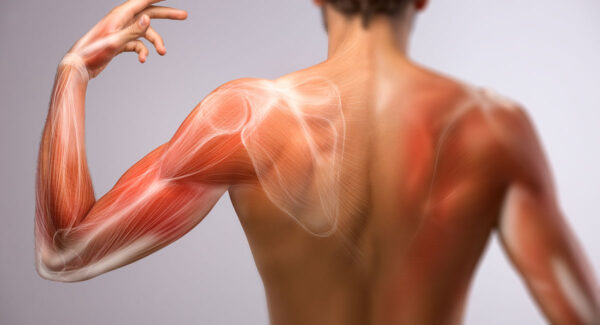 Muscle Injuries in Sport